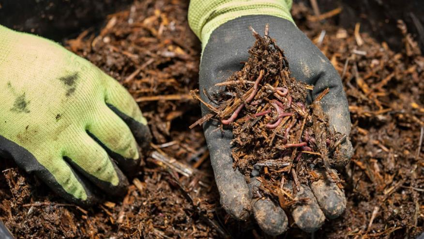 A Step-by-Step Guide to Vermicomposting
